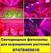 Светодиодные фитолампы для выращивания растений.